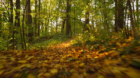 Sunny autumn forest and fallen leaves, front view, smooth steadicam shot Footage