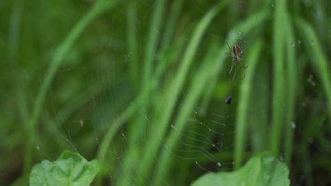 Spider web by a small creek, shallow focus Footage