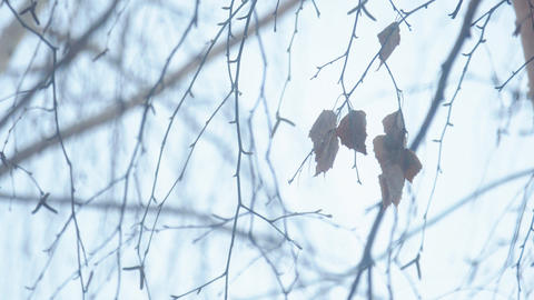 Dried leaves against the background of sky Footage