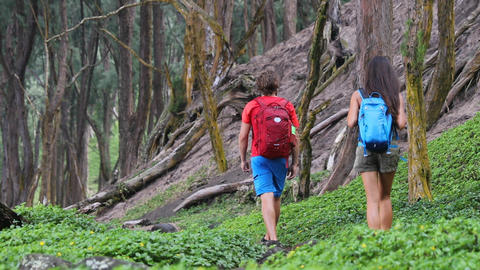 Hiking people on hike on green forest trail with backpacks living active life Live Action