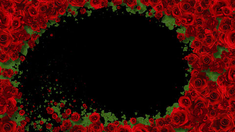 Red Roses Wipe Transition with alpha channel GIF