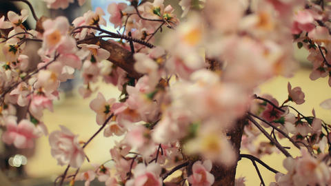 View of blossom Japanese sakura. Beautiful flowers. Blooming ภาพวิดีโอ