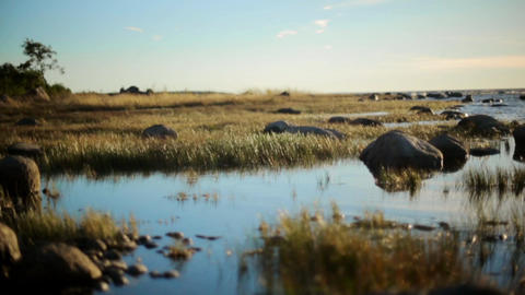 Sea shore with big stones and grass. Calm water surface. Swamp. Summer. Nobody Live Action