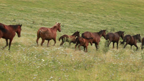 Herd of brown horses grazing in a green meadow. Landscape on mountains Footage