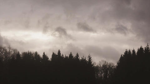 View of dark grey sky above forest in evening. Flying clouds. Nature. Landscape Live Action