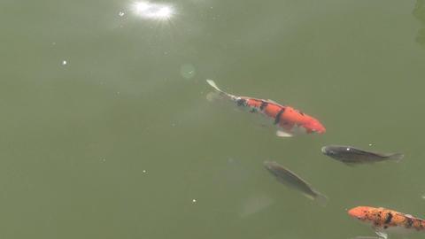 feeding fish Footage