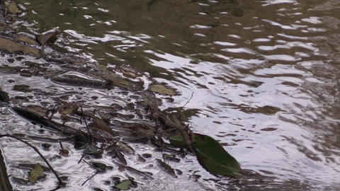 river Footage