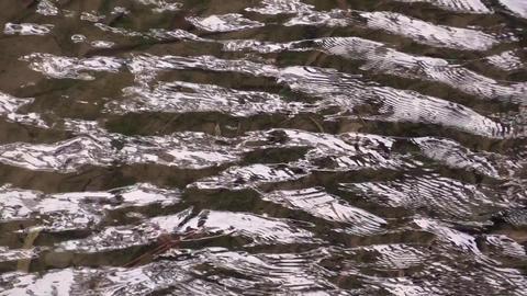 river Live Action