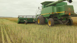 Combine Harvester Passing While Swathing a Canola Crop for Harvest Footage