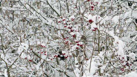 Winter Forest Woodpecker Squirrel Birds 4k