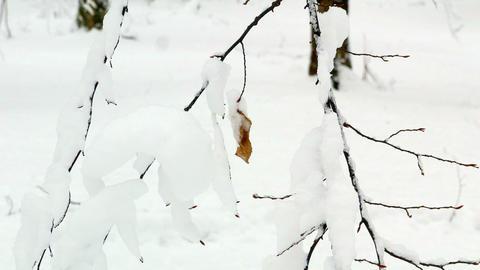 Winter Forest Woodpecker Squirrel Birds 4k 0
