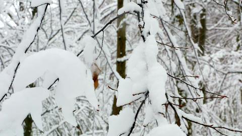Winter Forest Woodpecker Squirrel Birds 4k 1