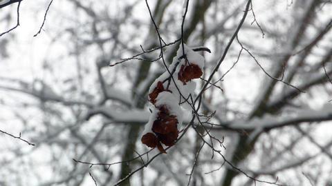 Winter Forest Woodpecker Squirrel Birds 4k 2