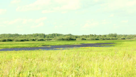 Seaside marches and wet meadows with shrubs, ponds Live Action
