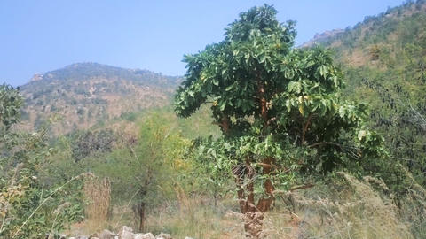 Bush on slopes of hills of Deccan plateau 画像