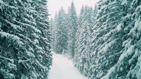 Aerial shot of a forest in heavy snow Footage