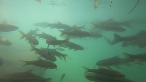 Fish swimming in Erawan Waterfall underwater Footage