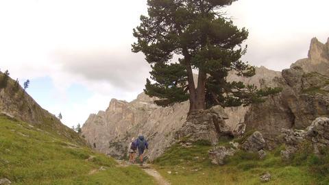 pov walking in Antersas near a pine Footage