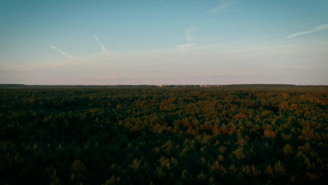 aerial drone shot of pine forest Footage