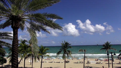 Palm trees at beautiful beach of Ft. Lauderdale – FT.LAUDERDALE, FLORIDA/USA O Live Action