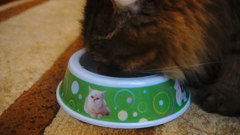 beautiful furry cat eating from a bowl, slow motion Footage