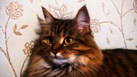 portrait of a beautiful gray cat ビデオ