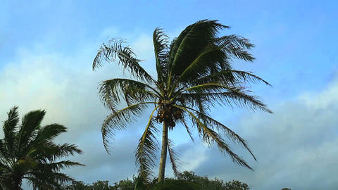 Footage - Winds Blowing over Palm Trees with Blue Sky Footage
