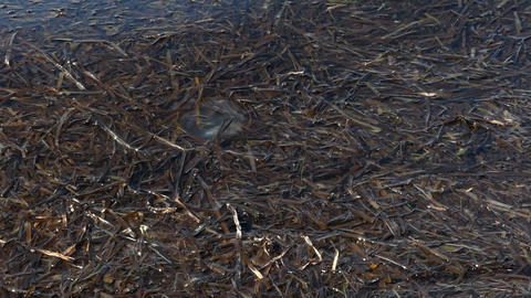 Seashore covered with brown weeds in summer in slo-mo Live Action
