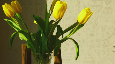 Faded yellow tulip buds raised Footage