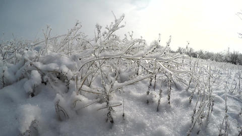 Grass And Trees In The Snow stock footage