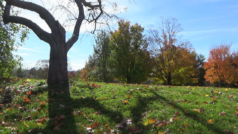 Sunny Autumn Landscape With A Scary-looking Tree And Falling Leaves In The Park stock footage