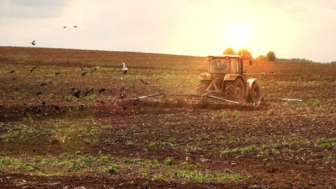 Tractor cultivates the soil on sunset Footage