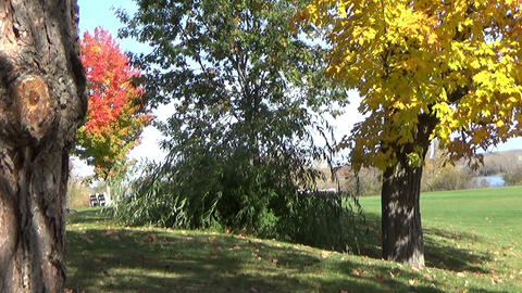 Sunny autumn landscape with two benches and falling leaves in the park Footage