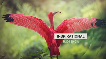 Inspirational Slideshow After Effects Template