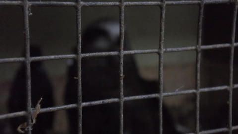Eagle behind bars (emphasis) as symbol of restraint of liberty Live Action