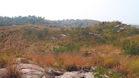 Deccan plateau covered with grasses and acacia bushes Live Action