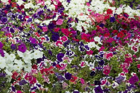 Beautiful bunch of colorful flowers in a garden フォト