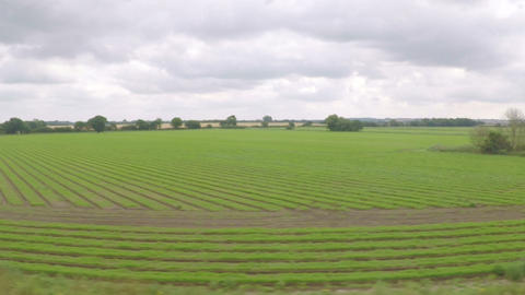 Countryside with trees and green fields seen from a moving train Footage