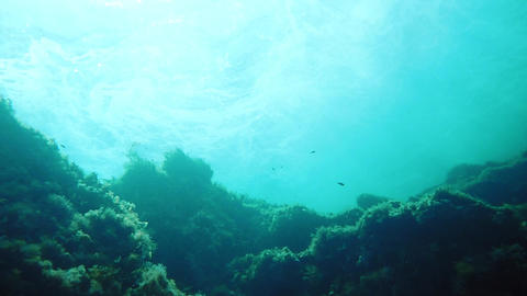 Underwater view of reef with surging waves on the surface 영상물