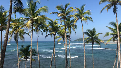 Tropical Island Ocean Waves And Palm Trees Footage