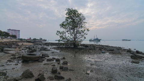 Timelapse Lonely mangrove tree (Pokok Bakau) at the seaside of Jelutong Drive Footage
