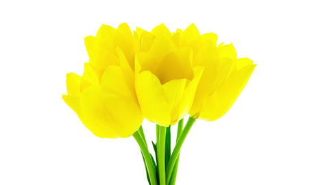 Bunch of yellow tulips flowers blooming timelapse Footage