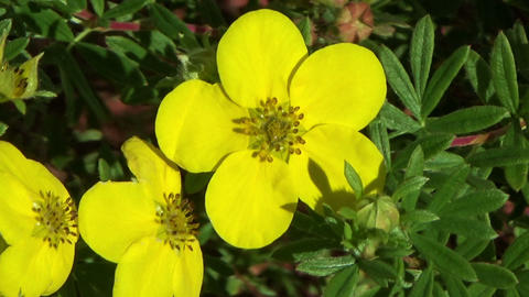 Yellow flowers blowing in the summer wind Footage