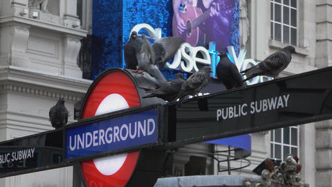 Pigeons landing on Underground subway Entrance - pigeon problem in London - LOND Footage
