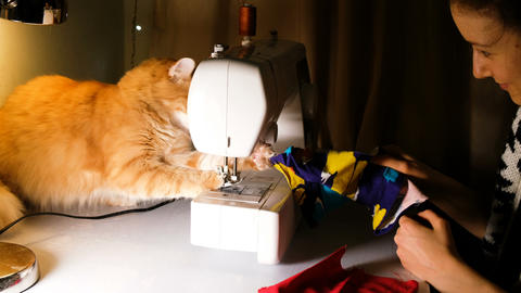 Girl is played with a red cat on the sewing table, the cat interferes with Footage