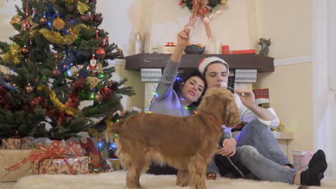 Happy in love couple eats marshmallow near Christmas tree Footage