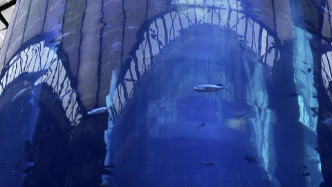 Aquarium inside Radisson Hotel Sea Life in Berlin, Live Action