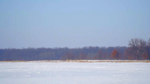 Snow-covered field and forest Footage
