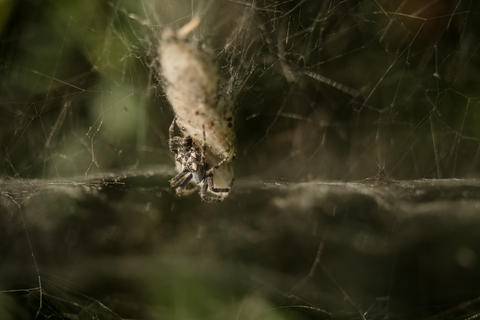 Spider is hanging in the net at the prey フォト