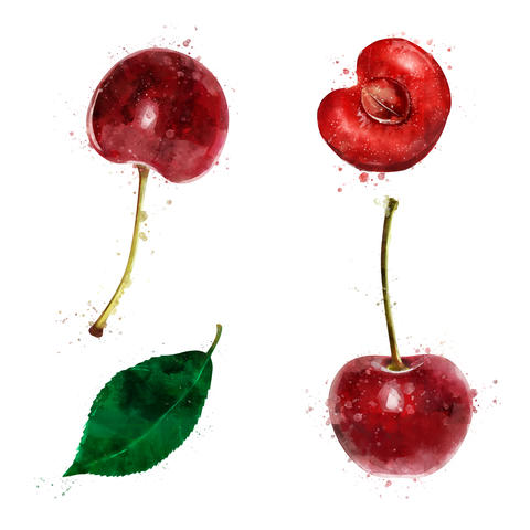 Cherry on white background. Watercolor illustration フォト